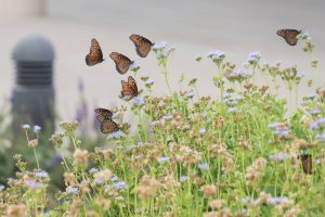 Pollinators get by with a little help from their friends